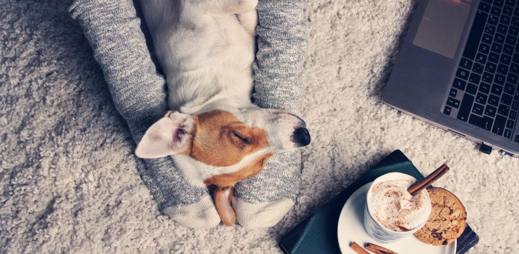 Bewezen: praten tegen je huisdier is goed voor je gezondheid