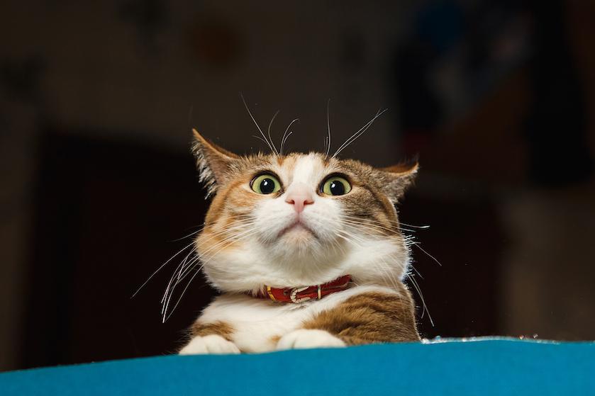 Oh yes! Je kunt nu de gelukkige eigenaar worden van dít kattencafé!
