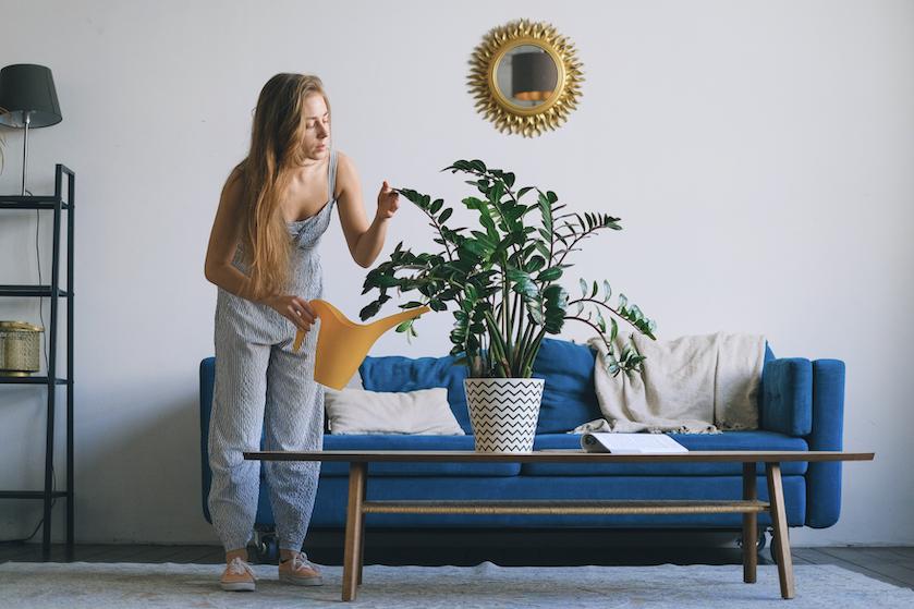 Schimmel in de potgrond van je kamerplanten? Zo los je dat op