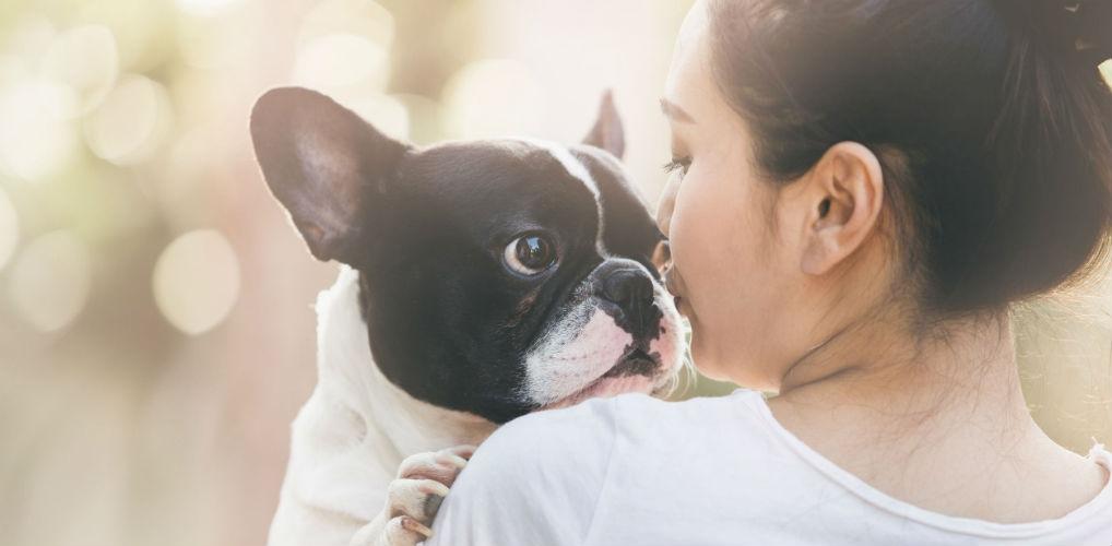 Goed nieuws: je kunt in de toekomst waarschijnlijk met je hond praten!