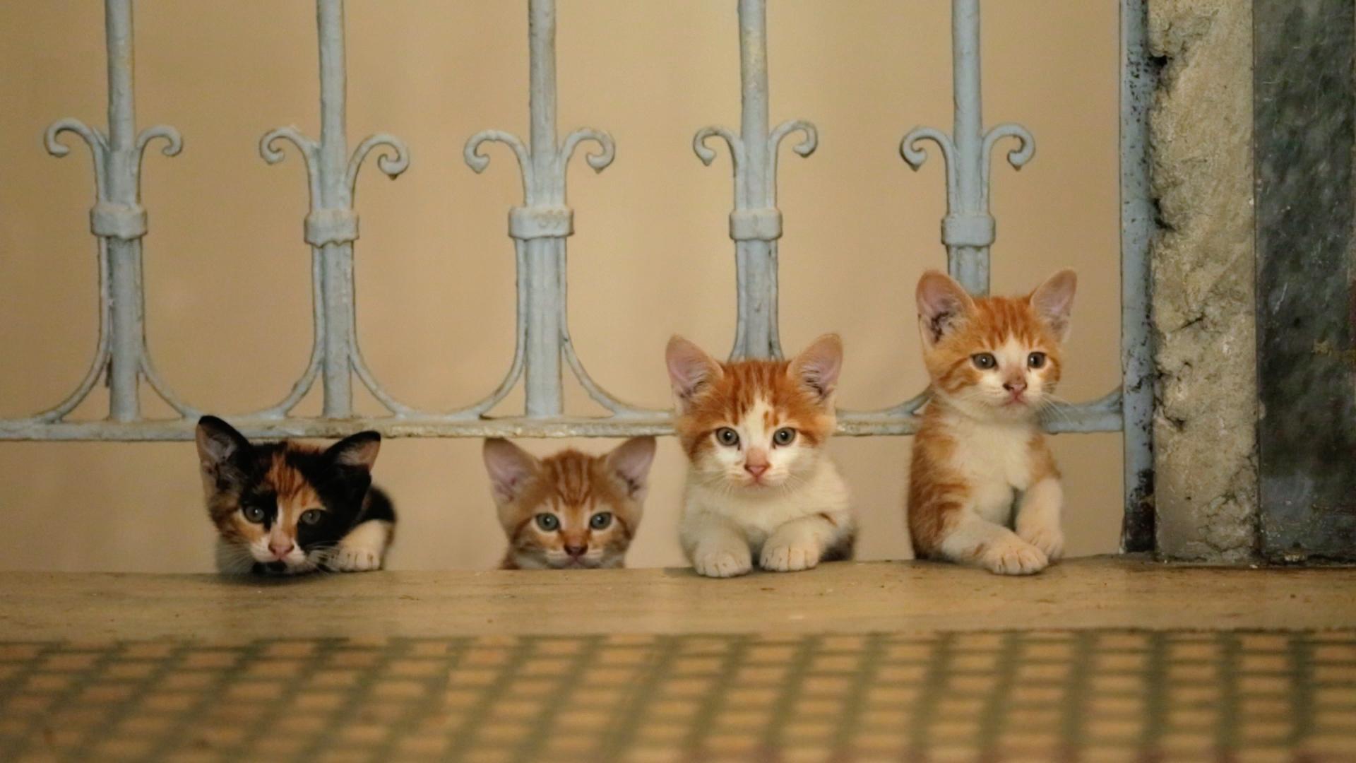 Winnen: kaartjes voor kattenfilm Kedi
