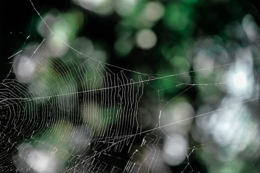 Met deze budgettip houd je spinnen met gemak buitenshuis