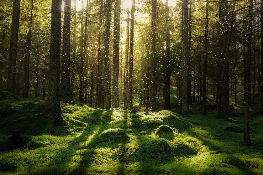 Bij groene gebieden wonen verlaagt risico op dementie