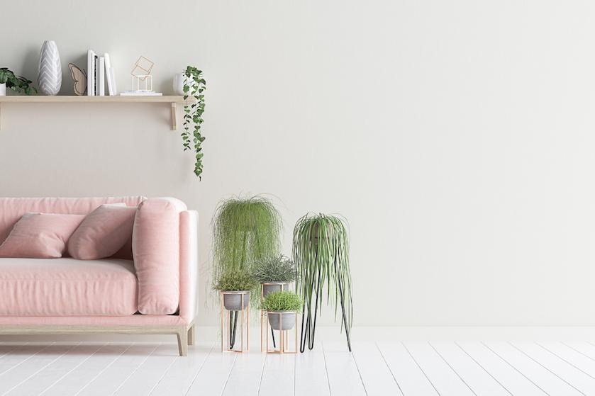 Hebben: deze roze (!) kamerplanten zijn dé interieurtrend van dit moment