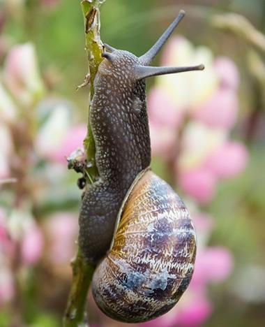 Slakken in je tuin, zo kom je ervan af!