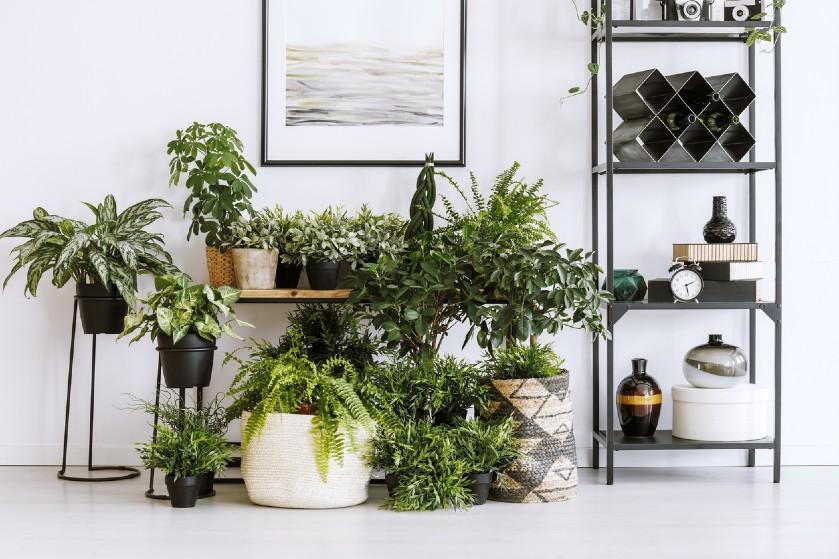 #Lifehack: kaneel blijkt een wondermiddel voor je planten te zijn en dít is waarom