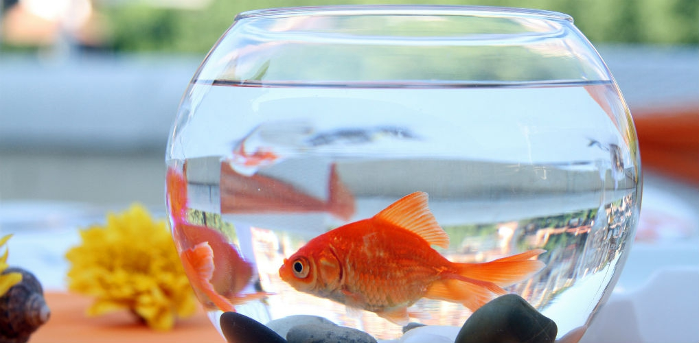 LOL: in dit hotel kun je een goudvis huren tegen de eenzaamheid