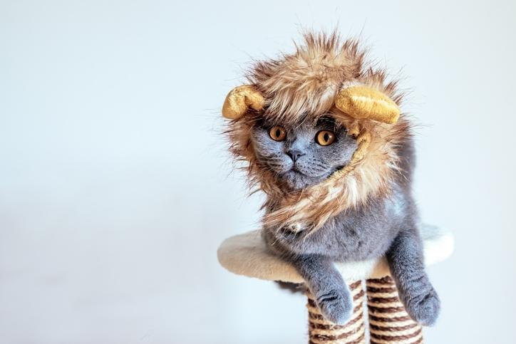 Kattenvrouwtjes opgelet: Londen krijgt een kattenfestival