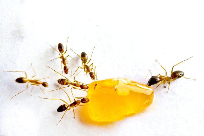 Zó houd je mieren buiten de deur