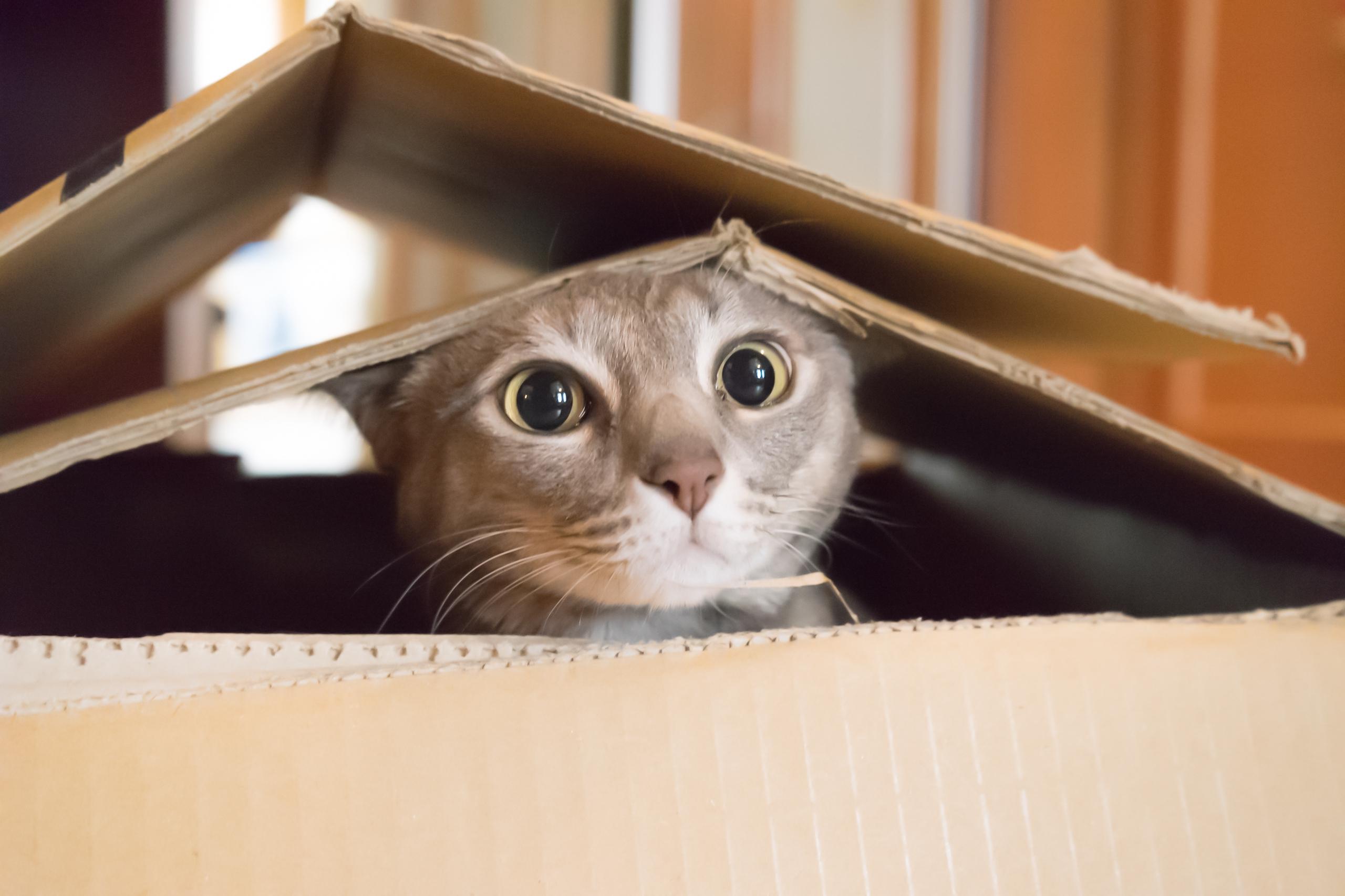 Zo verhuizen jij én je kat zonder al te veel stress