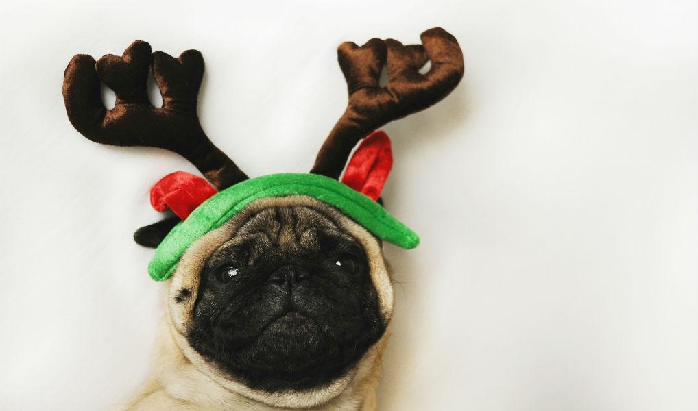Met deze mand komt zelfs je hond volledig in de kerstsfeer