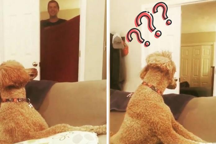 Hilarisch: hou je hond voor de gek en doe de 'What the fluff-challenge'