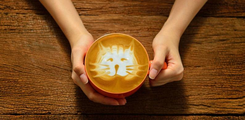 OMG: dit café is op zoek naar cat 'nannies'