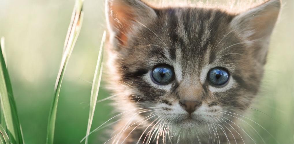 Pak die koffers maar: op dit eiland kun je met katten knuffelen