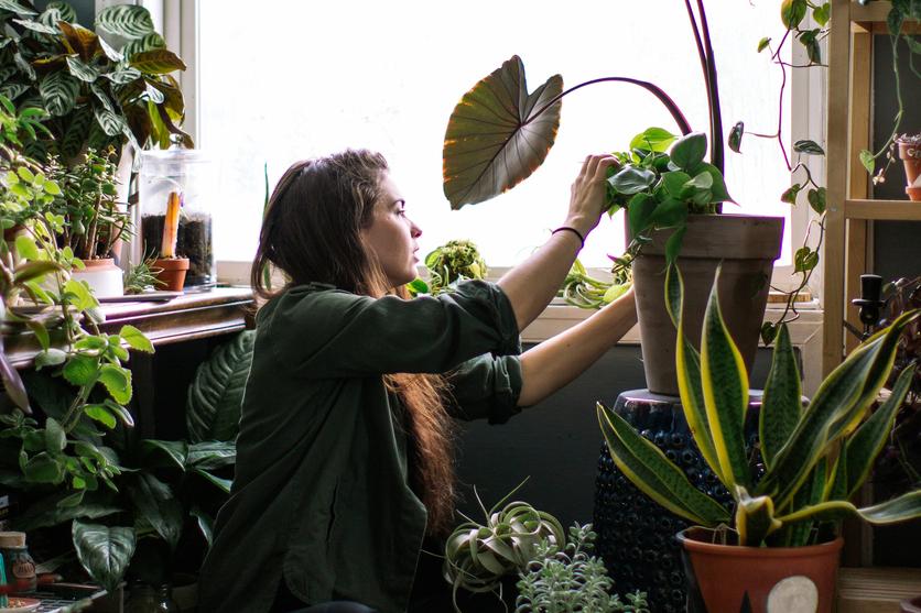 Met deze simpele tips blaas je stervende planten nieuw leven in
