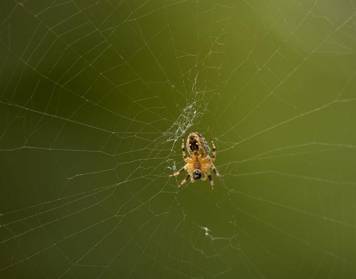 Met dít simpele wondermiddel jaag jij vieze spinnen uit je huis