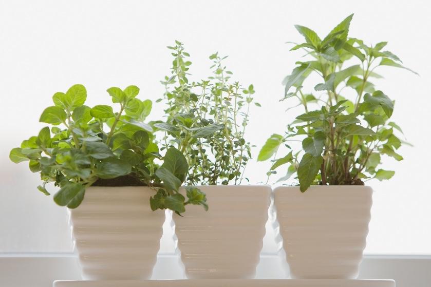 Thank us later: met déze tips houd je je kruidenplantjes uit de supermarkt wél in leven