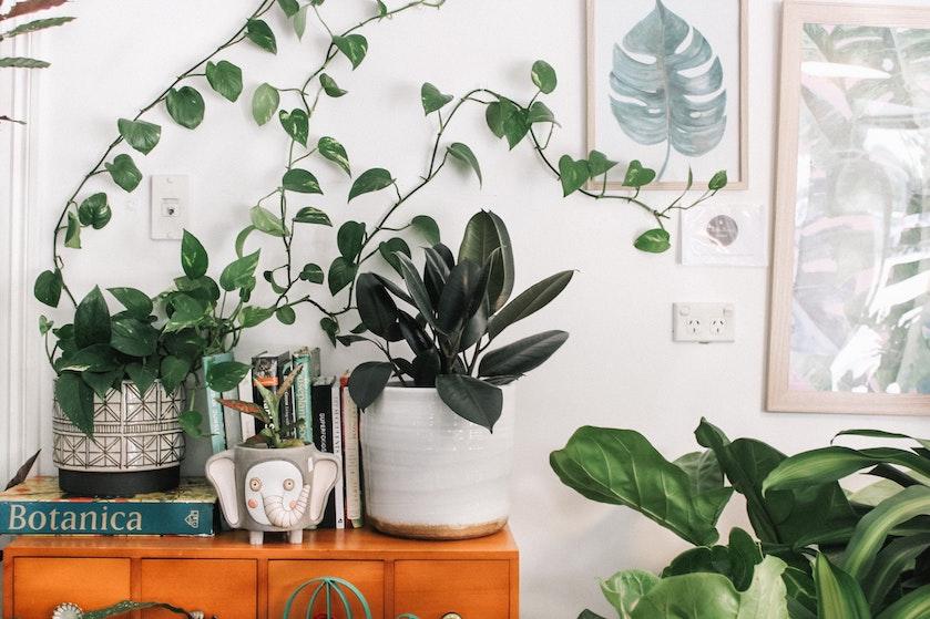 Nooit meer pompen of verzuipen: met dit trucje weet je of jouw plant genoeg water heeft