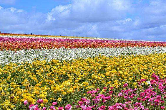 Wauw: 11 x de mooiste bloemenvelden