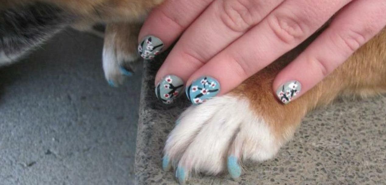 Voor kattenvrouwtjes: match je nagellak met die van je kat