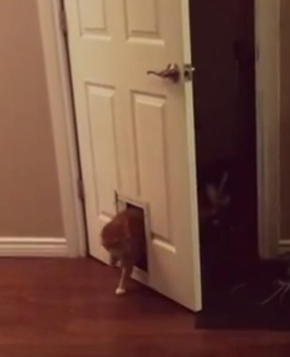 Kat opent de voordeur, maar dan…