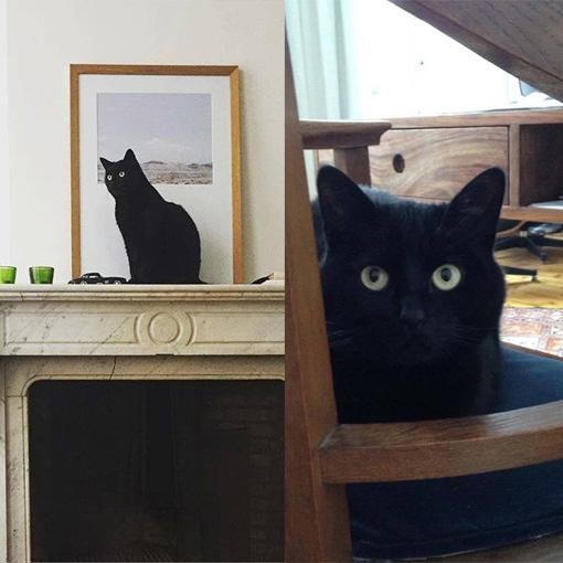 Internettrend: katten in kaders