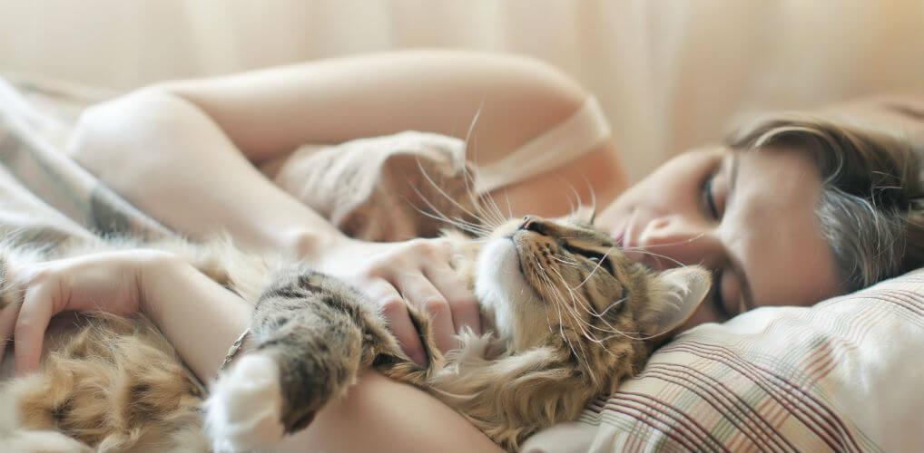 5 redenen waarom je je bed niet met je kat moet delen