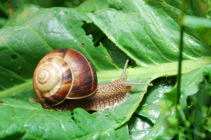 Slakken die je planten aanvreten? Met deze life hack is dat verleden tijd