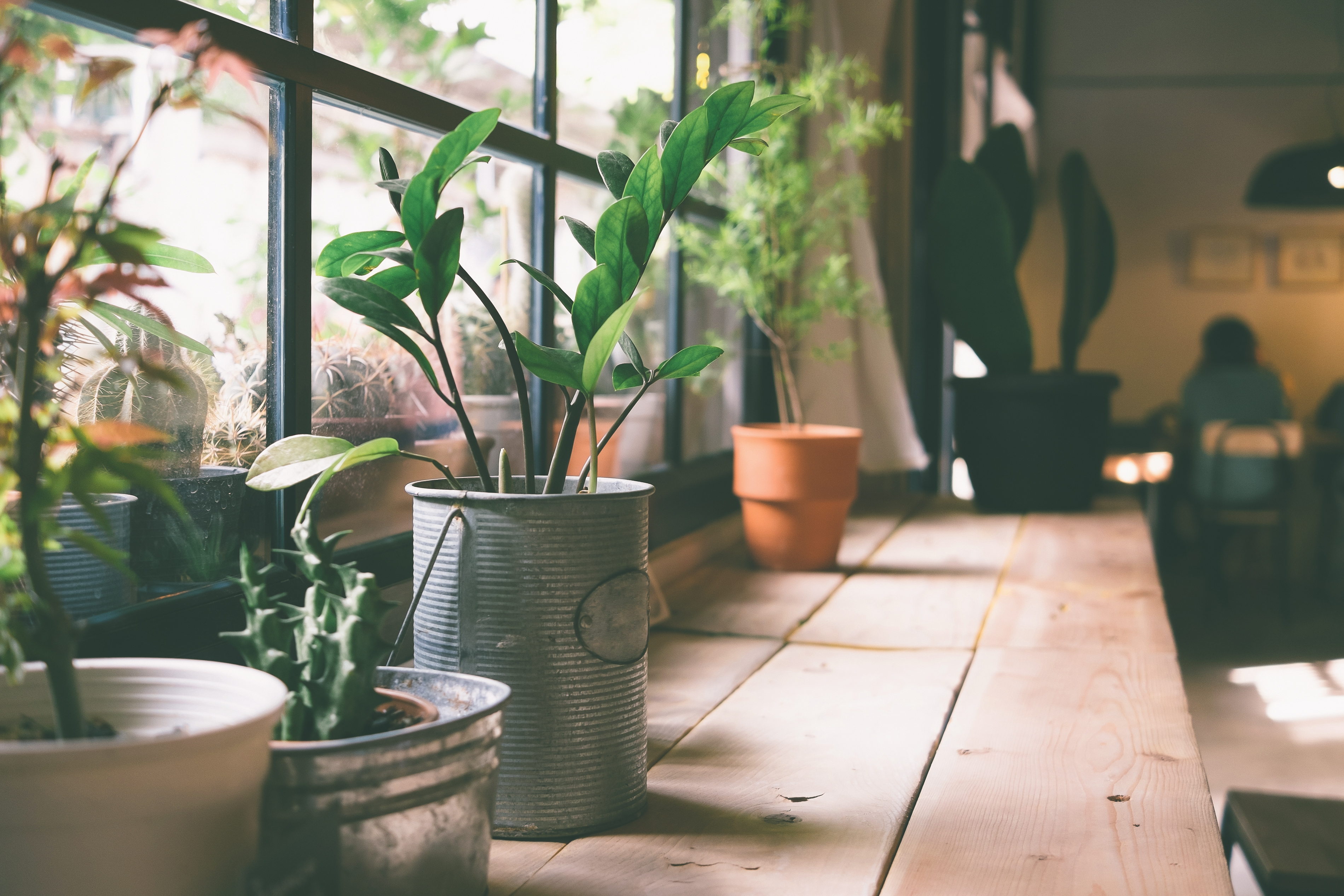 Gaan jouw planten altijd dood? Probeer dan dít simpele trucje eens!