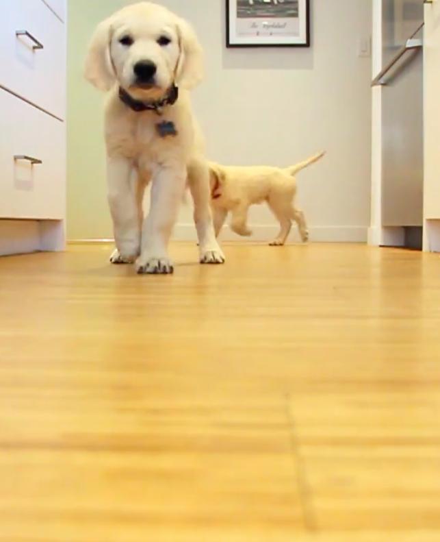 Kleine puppy's worden groot