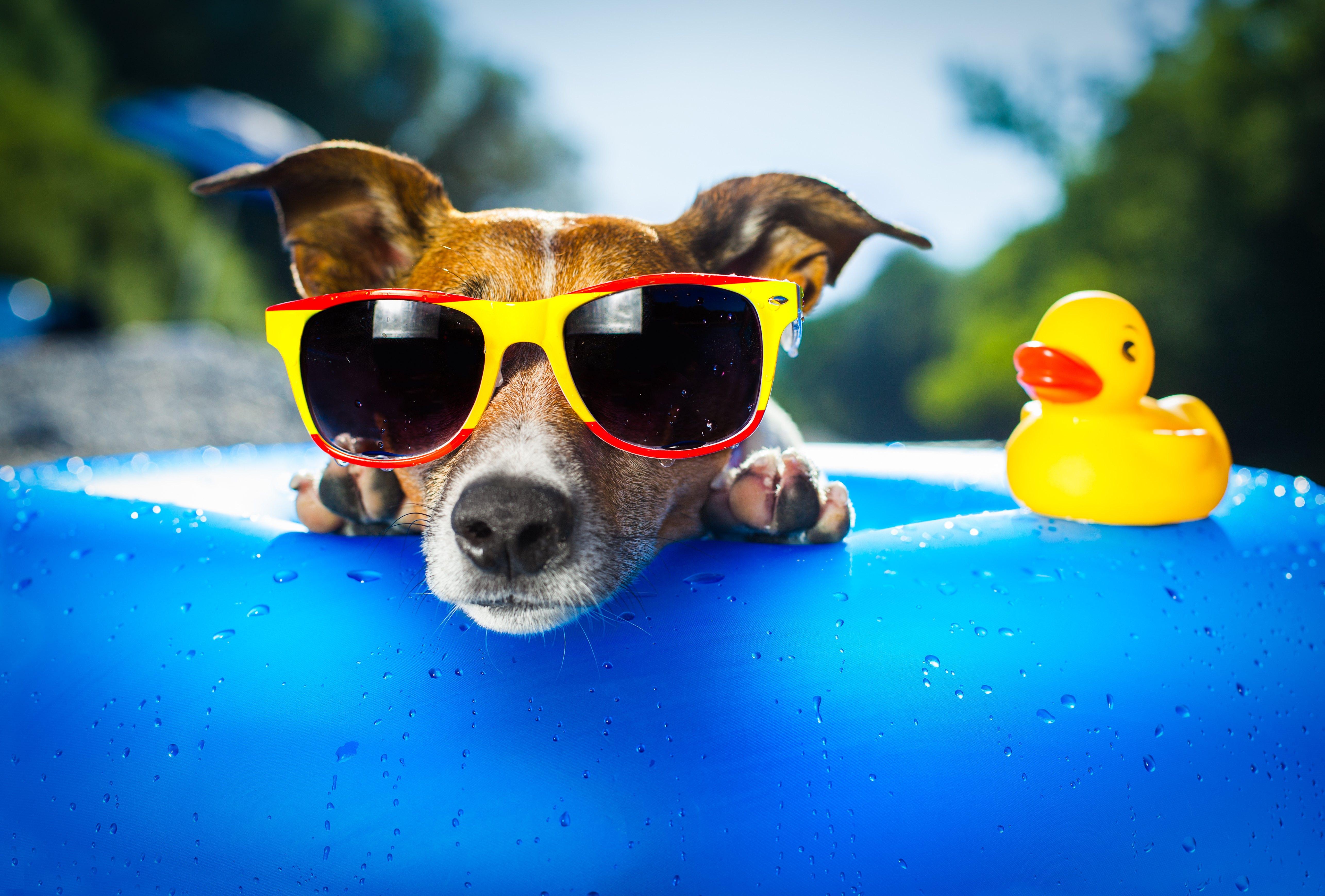 Test: welke hond past perfect bij jou?