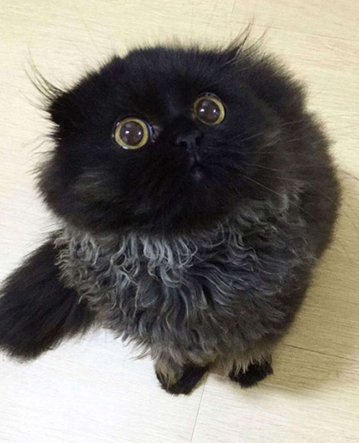 Deze kat heeft misschien wel de grootste ogen die we ooit gezien hebben