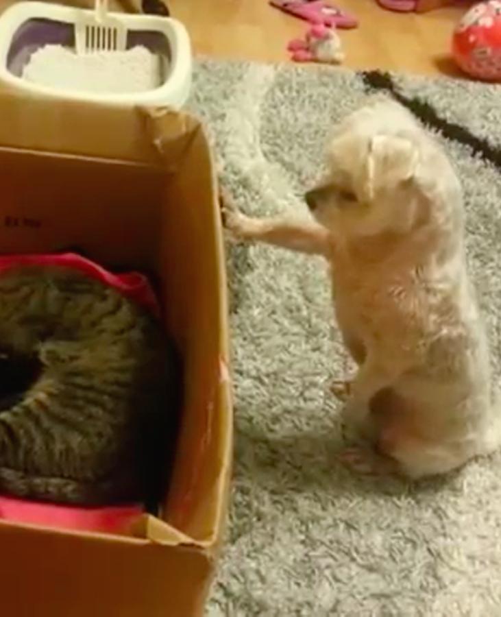 Hondje ziet voor het eerst een pasgeboren kitten