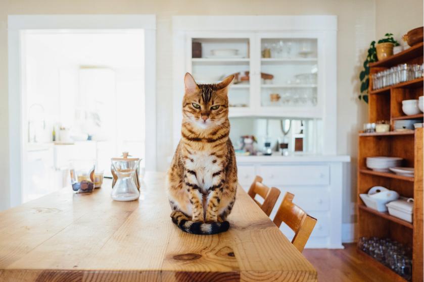 Dit is waarom katten zo graag aan jouw meubels krabben (en zo kun je het afleren)