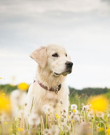 Waar laat jij je huisdier deze zomer?