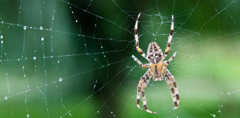Als de dood voor spinnen? Met deze truc jaag je ze weg