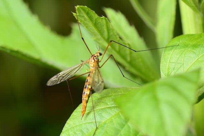 ZIEN: zó krijg je een muggenvrije tuin