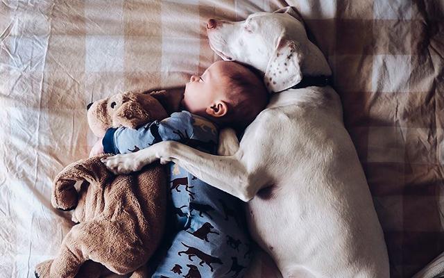 Zien: Moeder maakt de schattigste foto's van haar duttende baby en hond