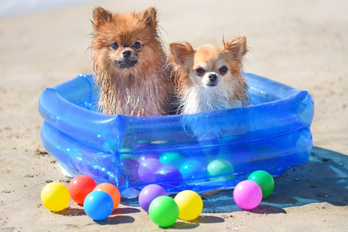 Zo leuk! Er bestaan nu matching pool floats voor jou en je hond