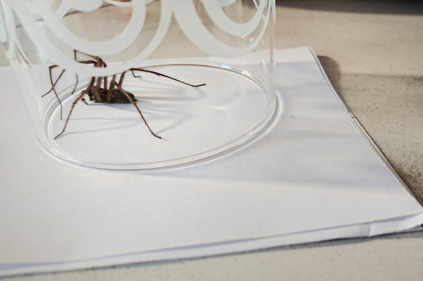 Spinnentijd is begonnen en helaas: ze zijn dit jaar dikker en groter dan ooit