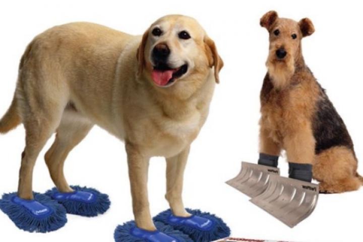 Geen zin om te poetsen? Dankzij Pet Sweep kan je huisdier vanaf nu ook zijn steentje bijdragen