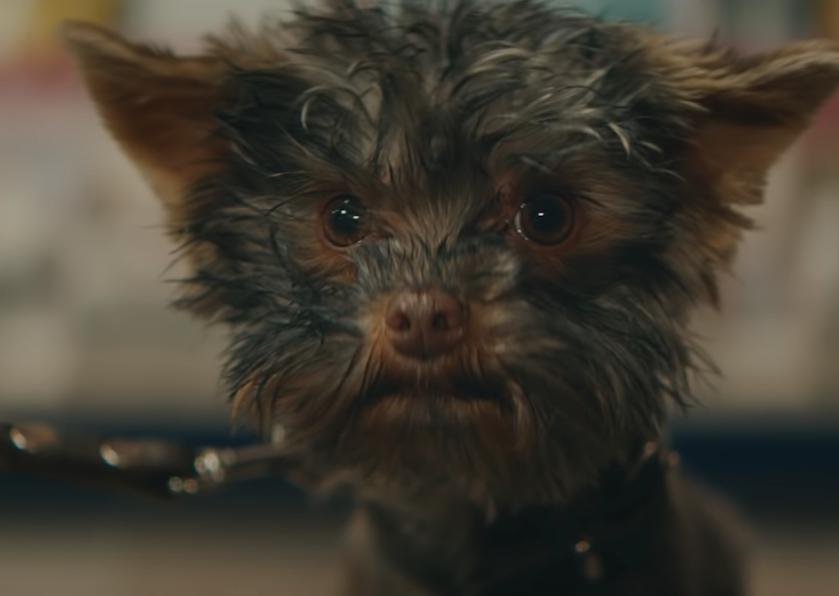 Nederland valt als een blok voor Staatsloterij-hondje Frekkel uit kerstcommercial