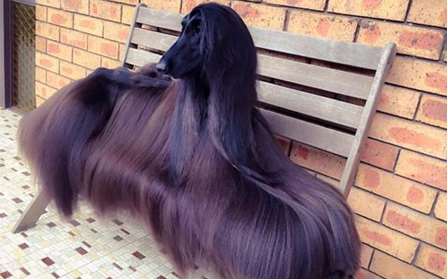 JA-LOERS: Wij willen hetzelfde haar als deze hond