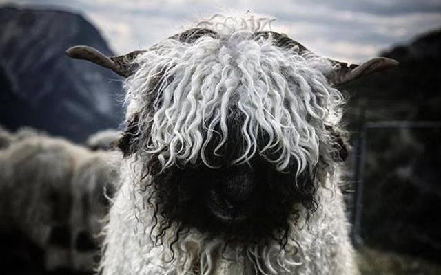 HORROR: Dementors en schapen kunnen kinderen maken