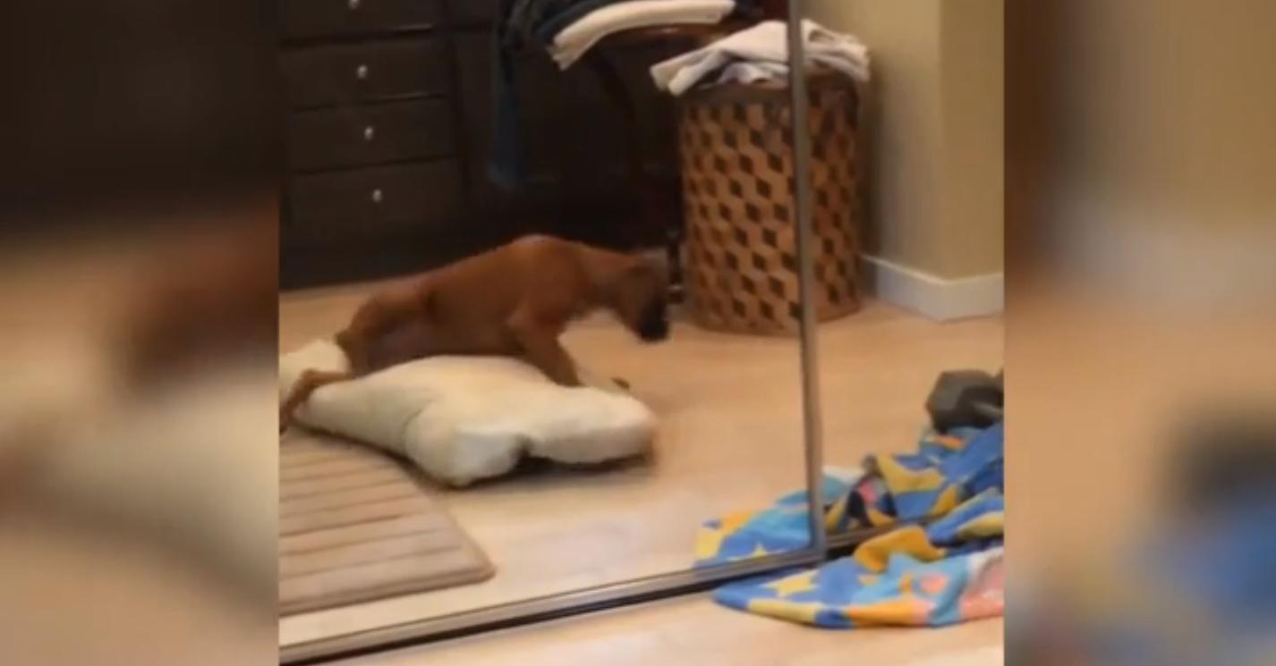 ZIEN: Deze pup maakt je sowieso aan het lachen