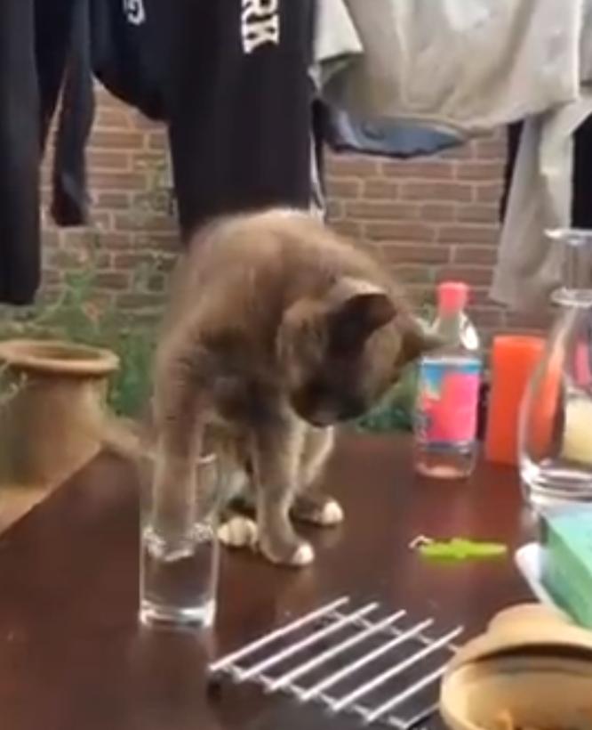 Kat wordt in de maling genomen