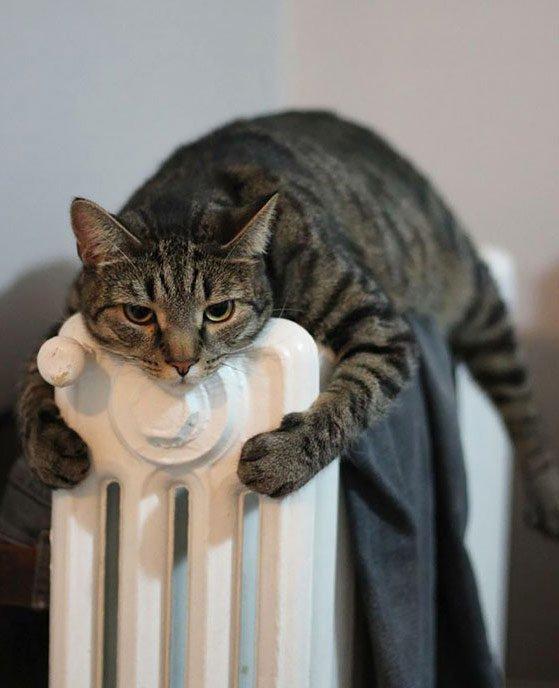 Katten houden van warmte: deze 16 foto's zijn het bewijs