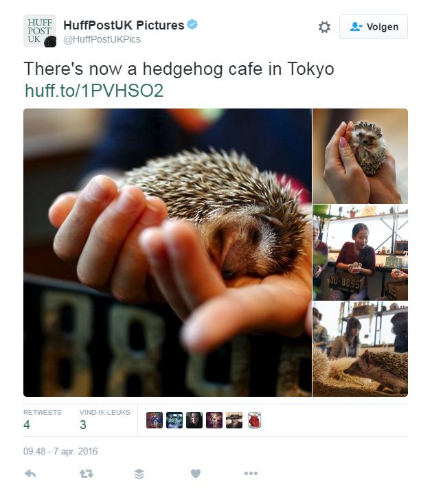 OMG! Dit egeltjescafé in Japan is zo schattig!