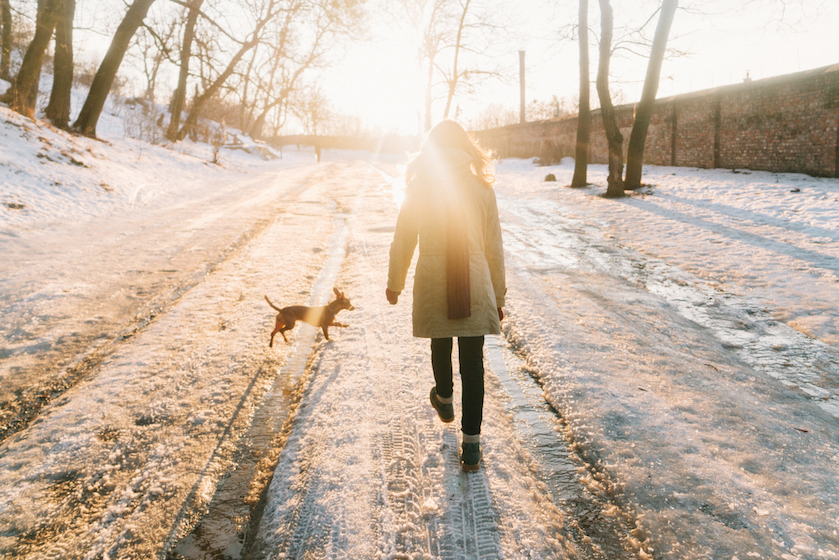 Dít moeten hondenbaasjes weten voor ze met hun viervoeter de sneeuw in gaan