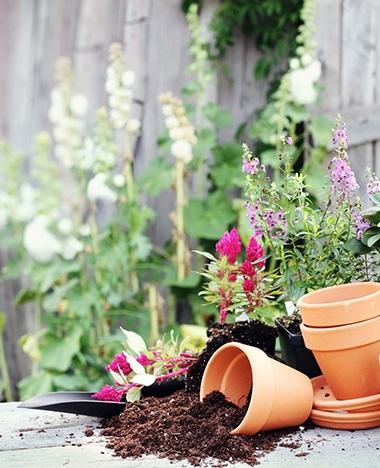 Planten verpotten doe je zo!